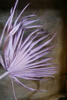 Palm Blatt   Milka
