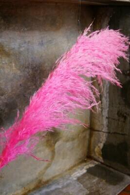 Pampasgras   Pink
