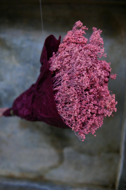 Broom Bloom | Deep-Pink