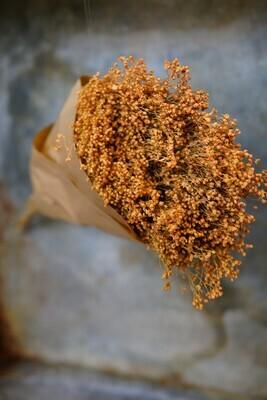 Broom Bloom   Dusty-Orange