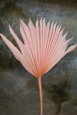 Palm-Fächer   Rosa