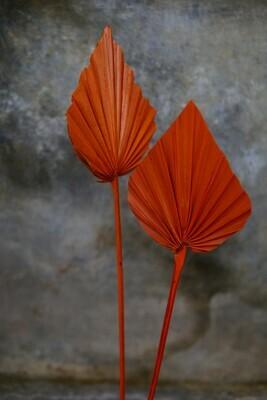 Palm-Speer   Orange