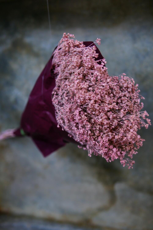 Broom Bloom | Rosa