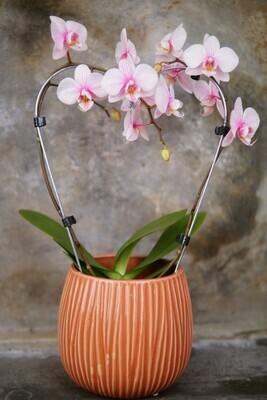 Orchidee | Herz