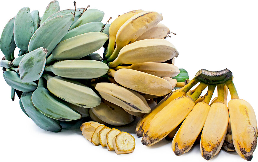 "Banana - Blue Java ""Ice Cream"""