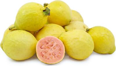 Guava - Pink 15 Gallon - 8-9'tall