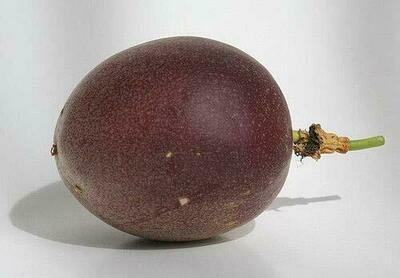 Passiflora Fredrick - Passion Fruit