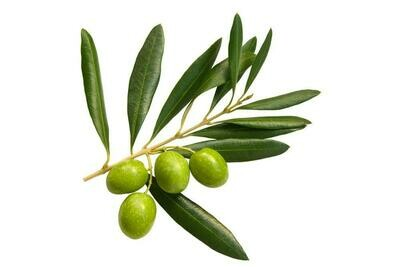Olive - Arbequina