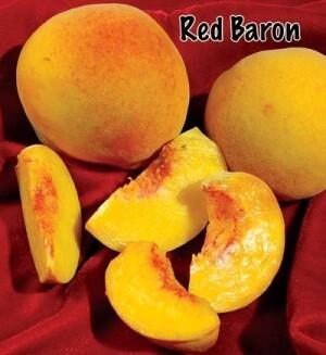 Peach – Red Baron