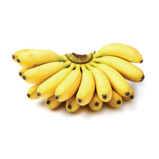 """Banana - Mysore """"Berry"""" (3 gallon)"""