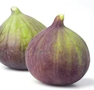 Figs - Olympian
