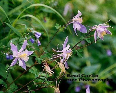 Floral 2009-2
