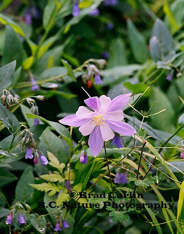 Floral 2009-1