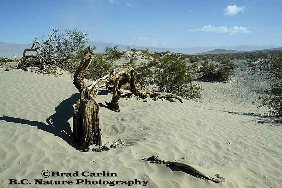 Death Valley Log mask