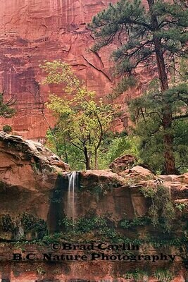 Colors of Zion 3