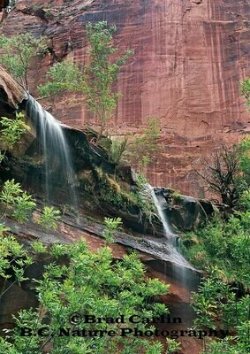 Colors of Zion