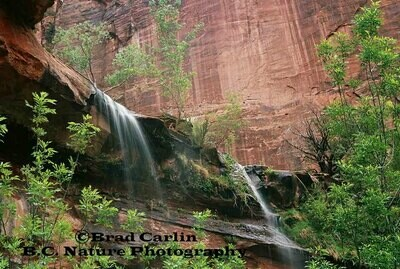 Colors of Zion2