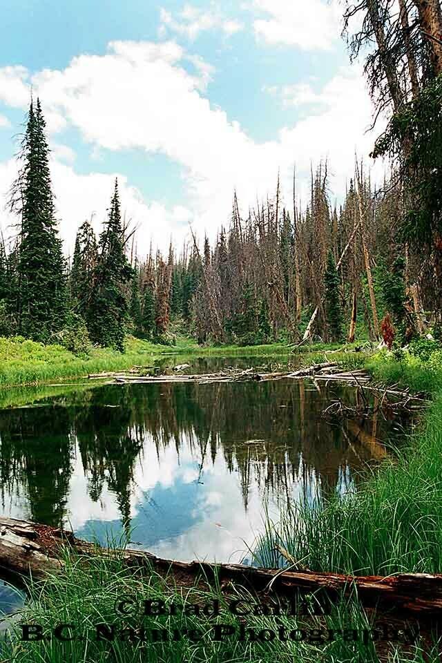 Cedar Breaks Pond