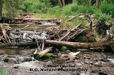 Fallen Timbers 2