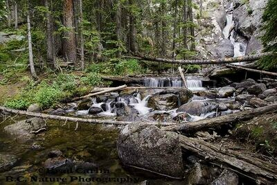 Willow Falls H