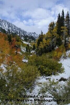 Blending Seasons