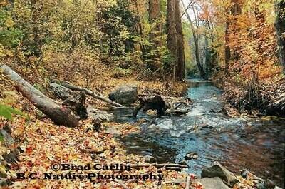Creekside Colors