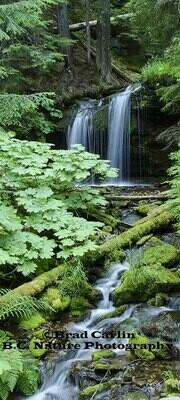 Fern Falls Pano1