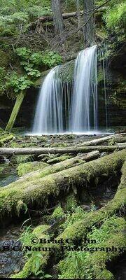 Fern Falls Pano2