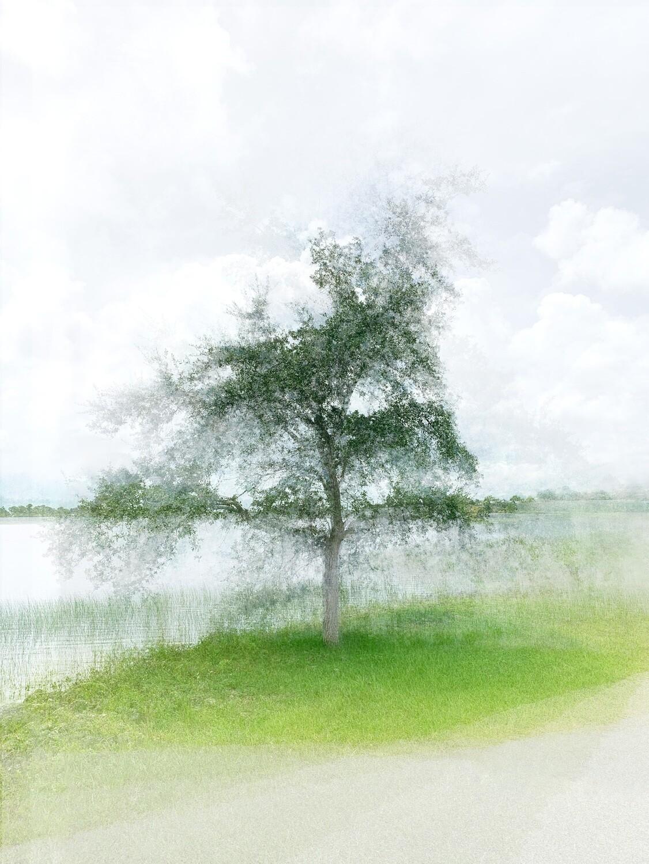 Oak at Babcock