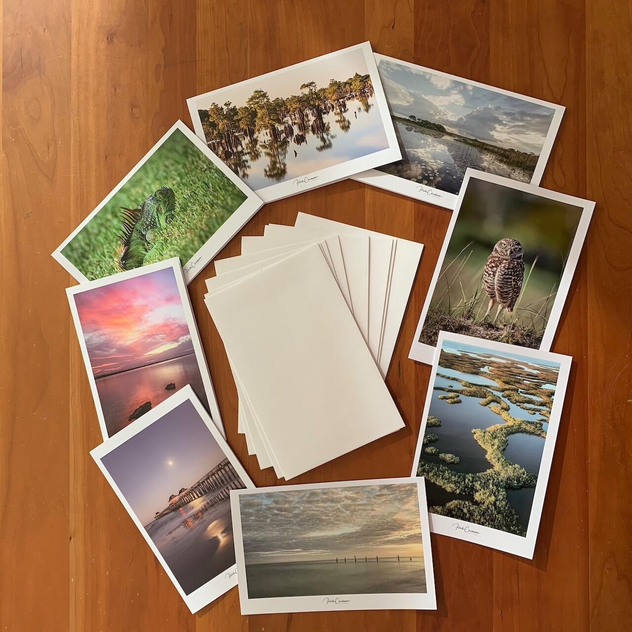 "Photo Greeting Cards 8"" x 5"" - ""My Florida"""