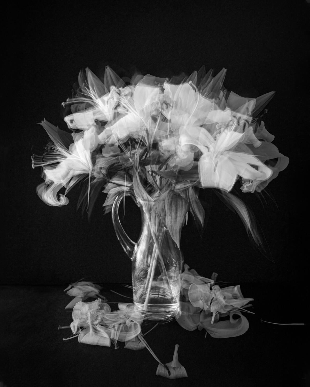 Evolving Lilies