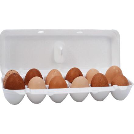 Jumbo Foam Egg Cartons