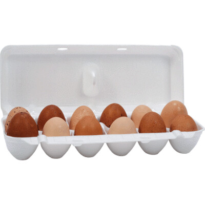 Jumbo Foam Egg Cartons
