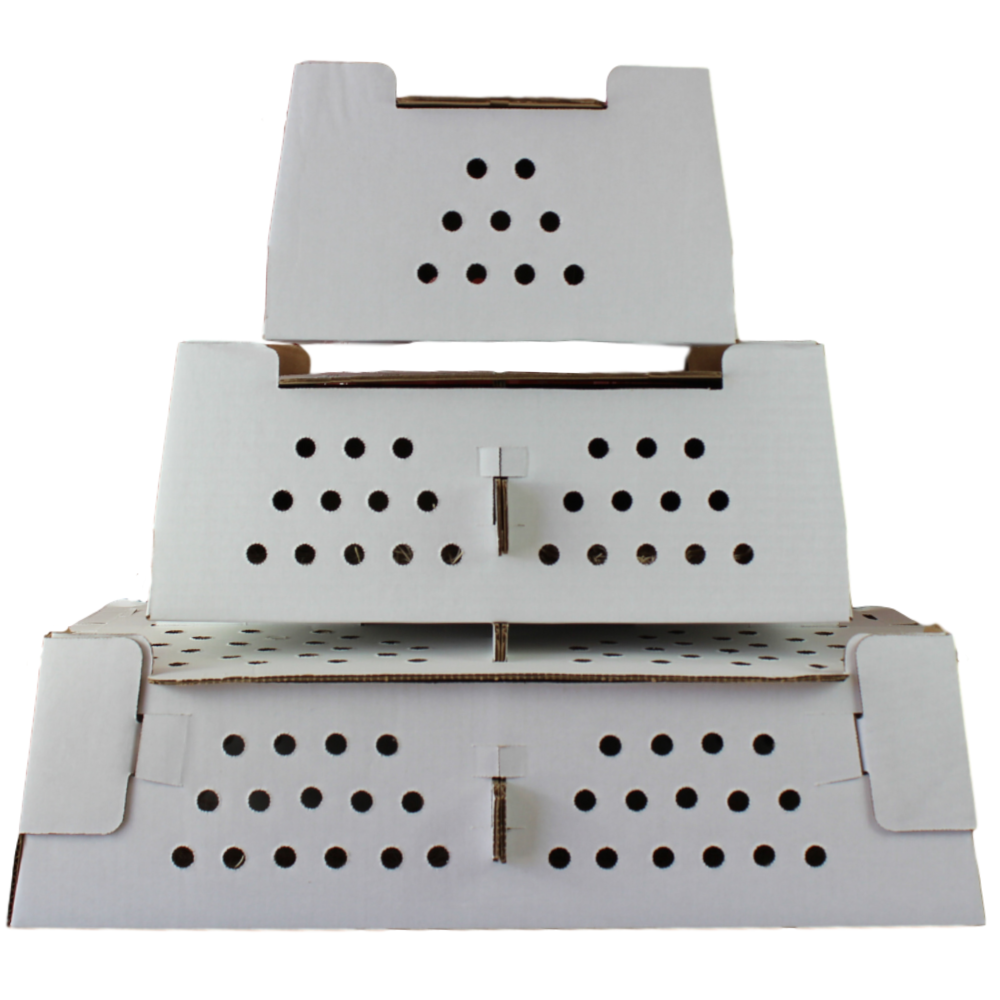 Chick Shipping Box