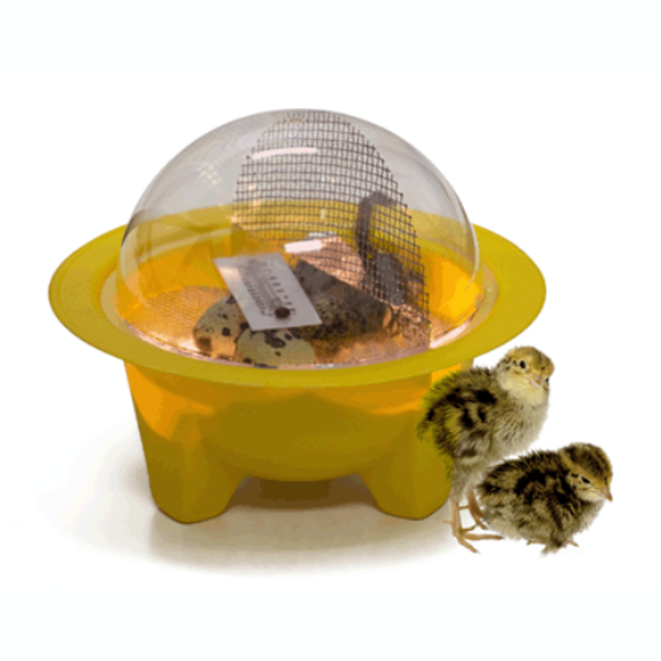GQF Chick-Bator Incubator