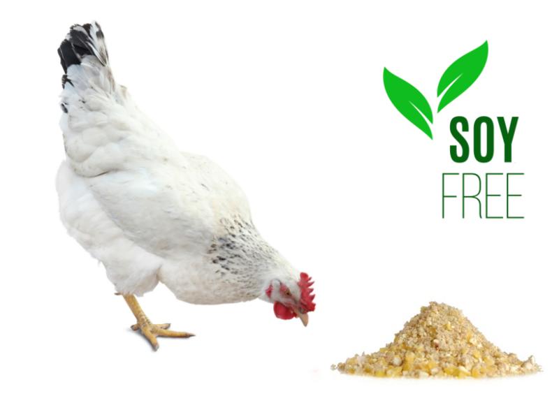 Non-GMO Soy-Free Layer Mash
