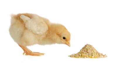 Conventional Meyer Hatchery Feed