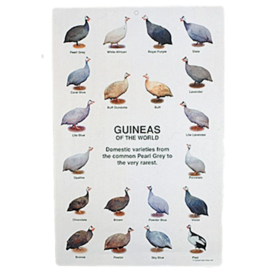 Guinea Fowl Poster