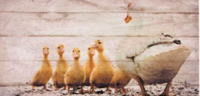 Mama Duck and Duckling Canvas