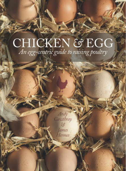 Chicken & Egg: Raising Chickens to Get the Eggs You Want