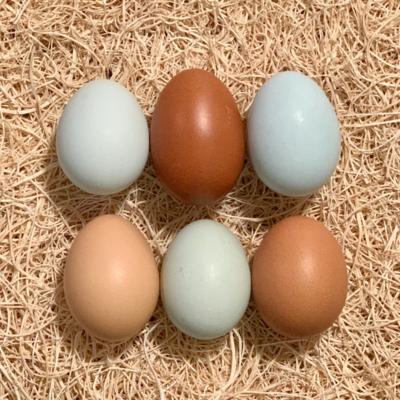 Olive Egger Hatching Eggs
