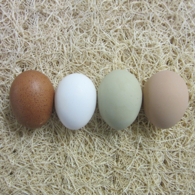 Assorted Chicken Hatching Eggs