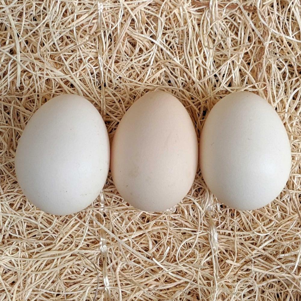 Assorted Bantam Hatching Eggs