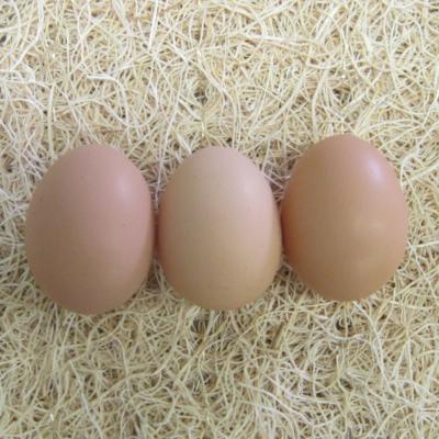Rhode Island Red Hatching Eggs