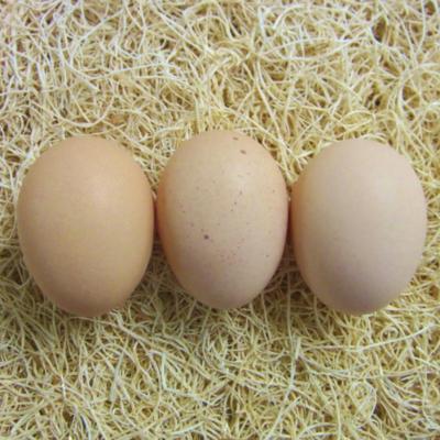 Buff Brahma Hatching Eggs
