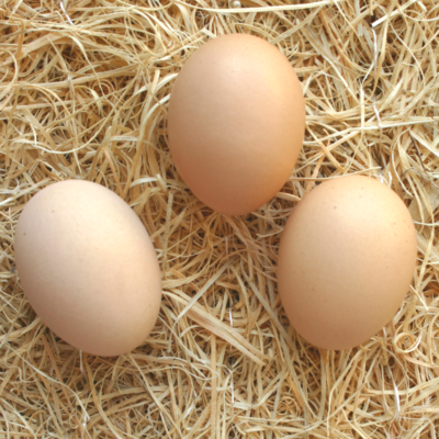 Light Brahma Hatching Eggs