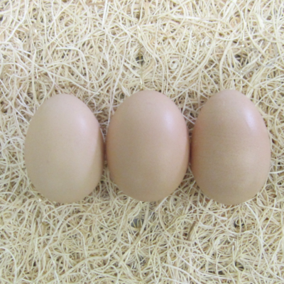 Partridge Cochin Hatching Eggs