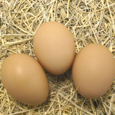 White Plymouth Rock Hatching Eggs