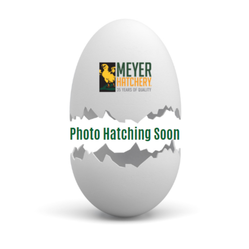 Home Fresh Egg - 50 lbs. - Crumble