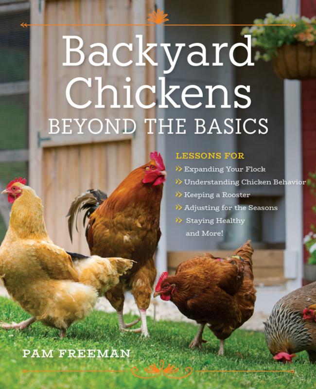 Backyard Chickens Beyond The Basics